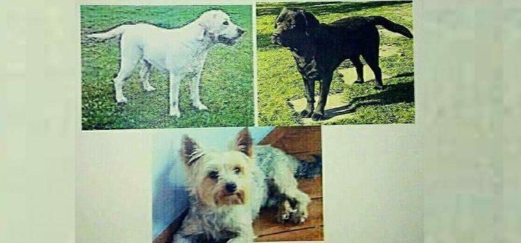 W okolicach Wielowsi zaginęły psy
