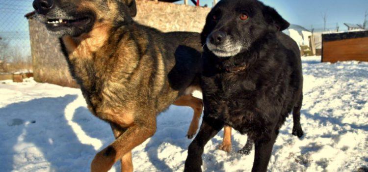 Bartuś i Fester mieszkają w jednym kojcu i nadal są do adopcji