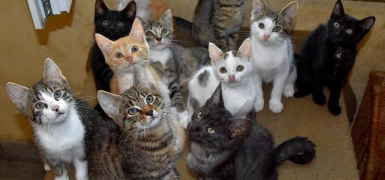 Kocięta mają domki
