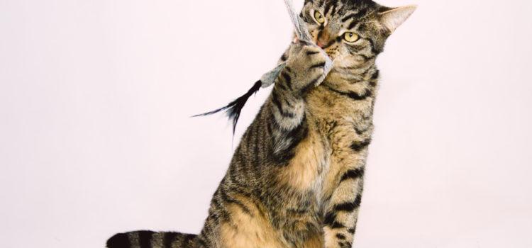 Zuzia młoda kotka do adopcji
